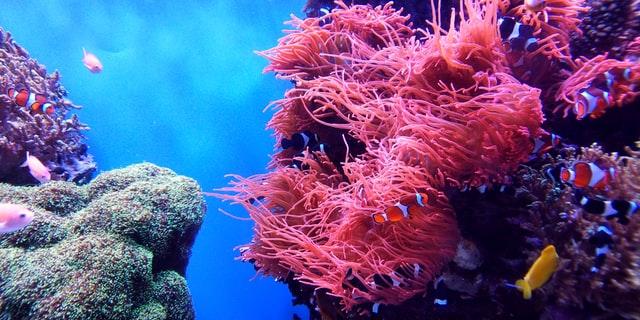 Krem z filtrem bezpieczny dla rafy koralowej
