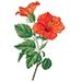 Woda z kwiatów Fagraea beteroana