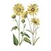 organiczny olej słonecznikowy