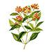 Organiczny olejek goździkowy Balsam Syberyjski EQ